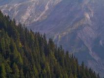 Media montaña del medio bosque fotografía de archivo libre de regalías