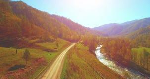 Mediados de aéreo sobre el río y el prado frescos de la montaña en la mañana soleada del verano Camino de tierra rural abajo Vaca metrajes