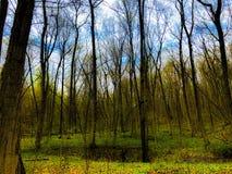 Mediados de bosque de la primavera fotografía de archivo