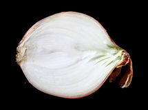 Medial section of onions isolated Royalty Free Stock Images
