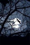 Medianoche del cuervo Fotografía de archivo