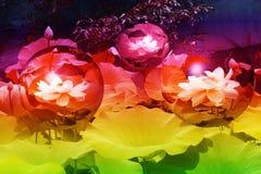 Medianoche en el jardín de Lotus Globes imagenes de archivo