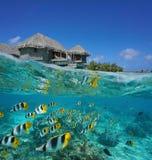 A medias casa de planta baja y escuela tropicales de pescados foto de archivo libre de regalías