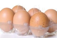 Medias docenas huevos de Brown en envase de plástico claro imagenes de archivo