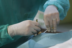 Medic working at morgue 014. A doctor works on a body before an organ extraction inside a morgue area in a hospital in palma de mallorca Stock Photography