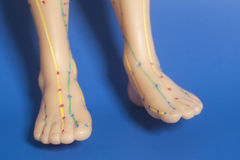 Medical acupuncture model of human feet  on blue Royalty Free Stock Photo