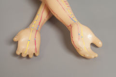Medical acupuncture model of human hand on gray Royalty Free Stock Photography