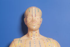 Medical acupuncture model of human head on blue Stock Photos