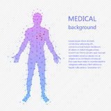 Medical background. Human anatomy. Medical background. Abstract model of man with points and lines. Vector background. Human anatomy Royalty Free Stock Image