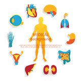 Medical background. Human anatomy. Medical background. Flat design icons for medical theme. Human anatomy, huge collection of human organs Royalty Free Stock Photography