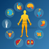 Medical background.Human anatomy. Medical background. Flat design icons for medical theme. Human anatomy, huge collection of human organs Royalty Free Stock Photo