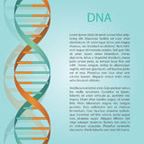 Medical bckground with DNA molecule with place for text.  Royalty Free Stock Photography