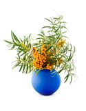 Medical berries. An autumn branch of buckthorn berries with yellow orange medical curative berries in dark-blue to vase on white background Royalty Free Stock Photo