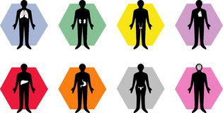 Medical body organ icons royalty free stock photos