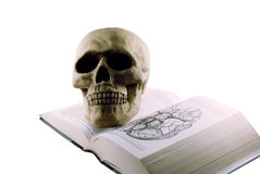 Medical book and skull. Medical book and a skull model for studying medicine Stock Photography