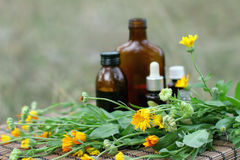 Medical calendula Stock Images