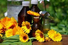 Medical calendula Stock Image