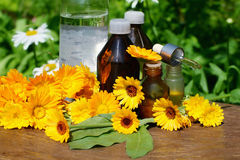 Medical calendula. Concept of calendula  flower essential oil and tincture - beauty treatment Stock Photo
