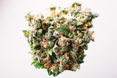Medical cannabis bud royalty free stock photography