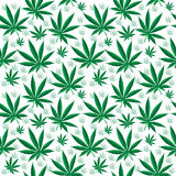 Medical cannabis seamless texture. Hemp background. wallpaper. Vector illustration Stock Photos