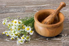 Medical chamomile Stock Photos