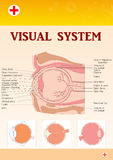 Medical chart of eye Stock Photo