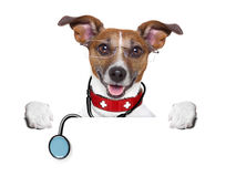 Medical doctor dog. Behind a blank banner royalty free stock photography