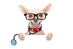 Medical doctor dog. Chihuahua dog as a medical veterinary doctor with stethoscope and first aid kit behind a white and blank banner ,isolated on white background royalty free stock photos
