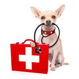 Medical doctor dog. Chihuahua dog as a medical veterinary doctor with stethoscope and first aid kit , on white background stock photos