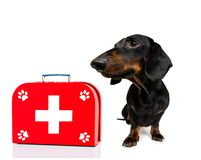 Medical doctor dog. Sausage dog as a medical veterinary doctor with stethoscope and first aid kit ,isolated on white background stock images