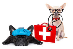 Medical doctor sick and ill dogs. Chihuahua dog as a medical veterinary doctor with stethoscope and first aid kit and a sick ill dog , on white background stock images