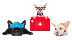 Medical doctor sick and ill dogs Stock Photos