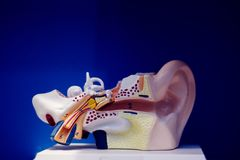Medical ear deafness model. Medical audiologist ear deafness teaching plastic model for diagnosis of deaf patients stock photo