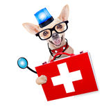 Medical emergency doctor dog. Chihuahua dog as a medical veterinary emergency doctor with stethoscope and first aid kit behind a white and blank banner and blue royalty free stock images
