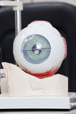 Medical Eye Model Royalty Free Stock Photos