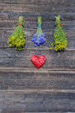 Medical flowers bunches collection on old wooden wall Stock Photos