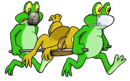 Medical Frog in action Stock Photo