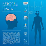 Medical and healthcare infographic, Brain  infographics Royalty Free Stock Images