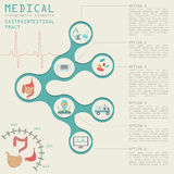 Medical and healthcare infographic, gastrointestinal tract infog Stock Image
