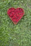 Medical healthy viburnum berry in wicker heart form basket Stock Photos