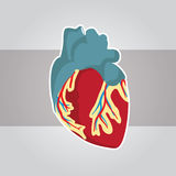 Medical Heart. For simulation or info-graphic element Royalty Free Stock Images