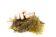 Medical herb Royalty Free Stock Photography