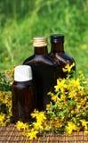 Medical herb -St John's wort royalty free stock image