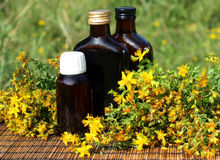 Medical herb -St John's wort Royalty Free Stock Images