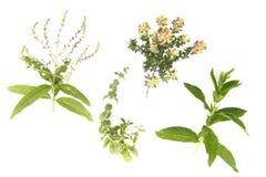 Medical herbs royalty free stock photos