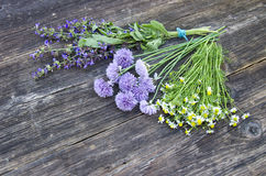 Medical herbs binch on old wooden background Stock Photos
