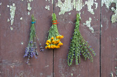 Medical herbs bunch on old wooden wall. P marigold calendula, hyssop and lavender stock photos