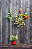 Medical herbs bunch on wall and red vase with chamomile Royalty Free Stock Image