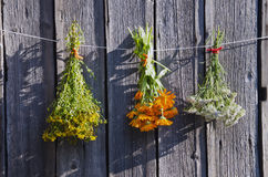 Free Medical Herbs Bunches On Old Wooden Farm Wall Royalty Free Stock Photo - 29299495