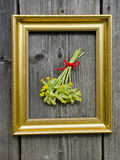 Medical herbs cowslip bunch on wall in picture frame Royalty Free Stock Photos